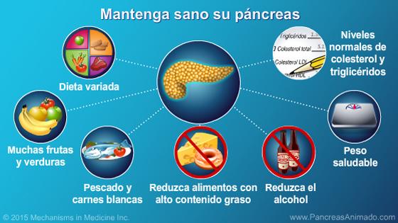 Función y anatomía del páncreas - Presentación de diapositivas